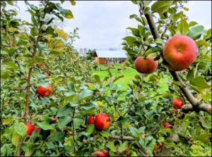 Apple Season in Wisconsin at Castle La Crosse